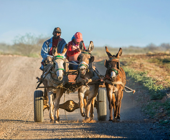 Donkey Cart - Northern Cape